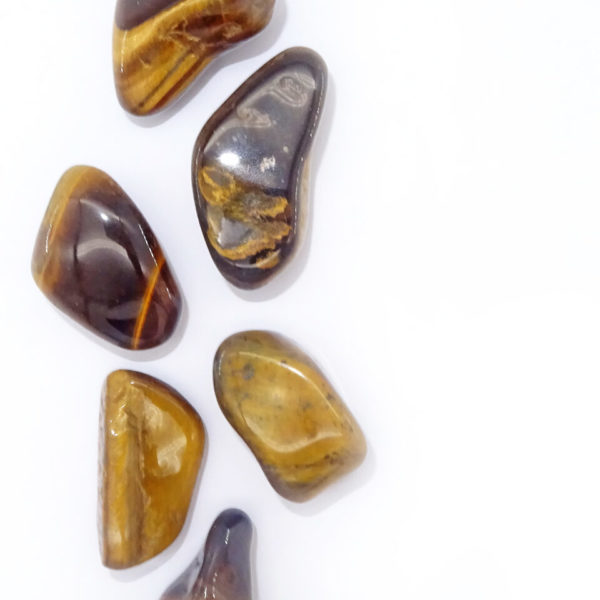 golden tigers eye at surrender to happiness