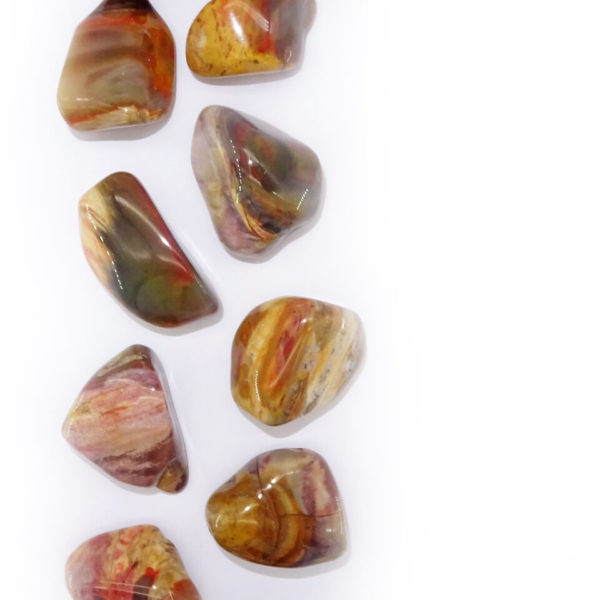 Petrified wood at surrender to happiness
